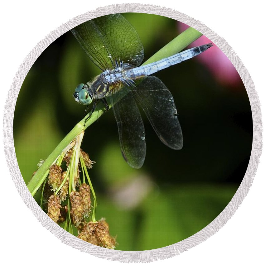 Dragon Round Beach Towel featuring the photograph Dragon Fly by Frozen in Time Fine Art Photography