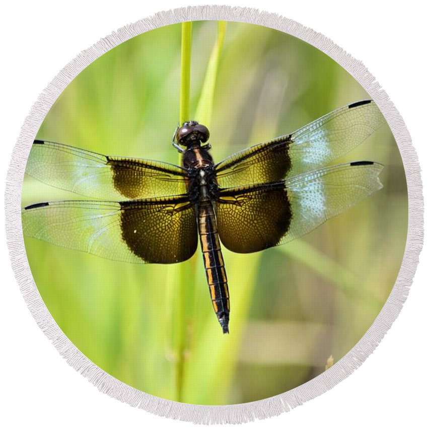 Round Beach Towel featuring the photograph Dragonfly 9249 by Bonfire Photography