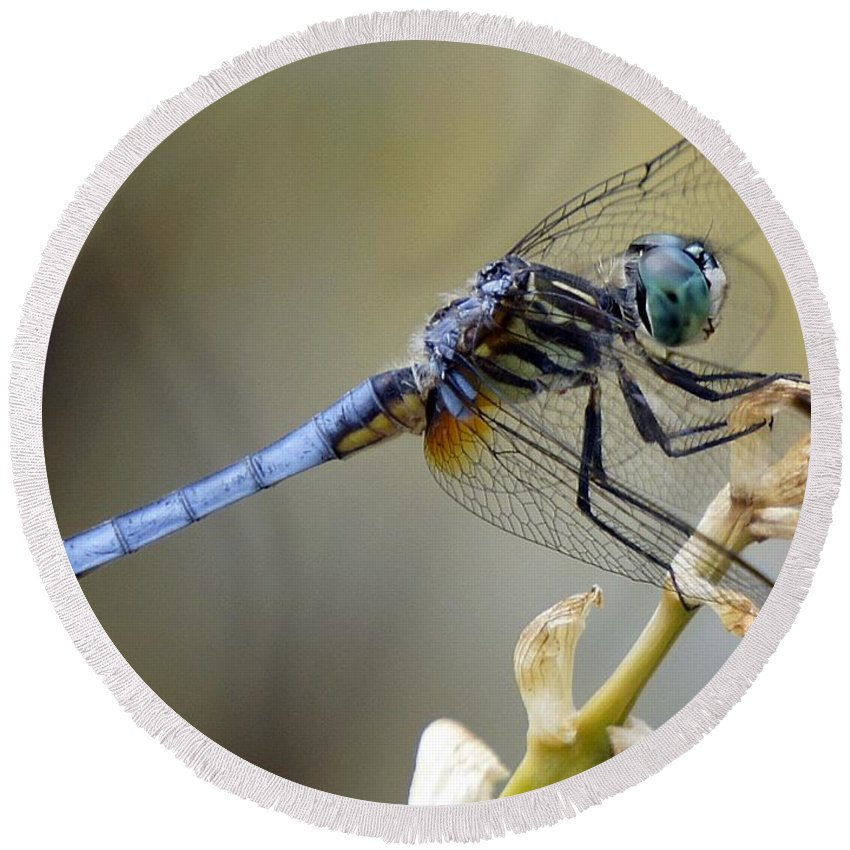 Dragonfly Round Beach Towel featuring the photograph Dragonfly Beauty by Lilliana Mendez
