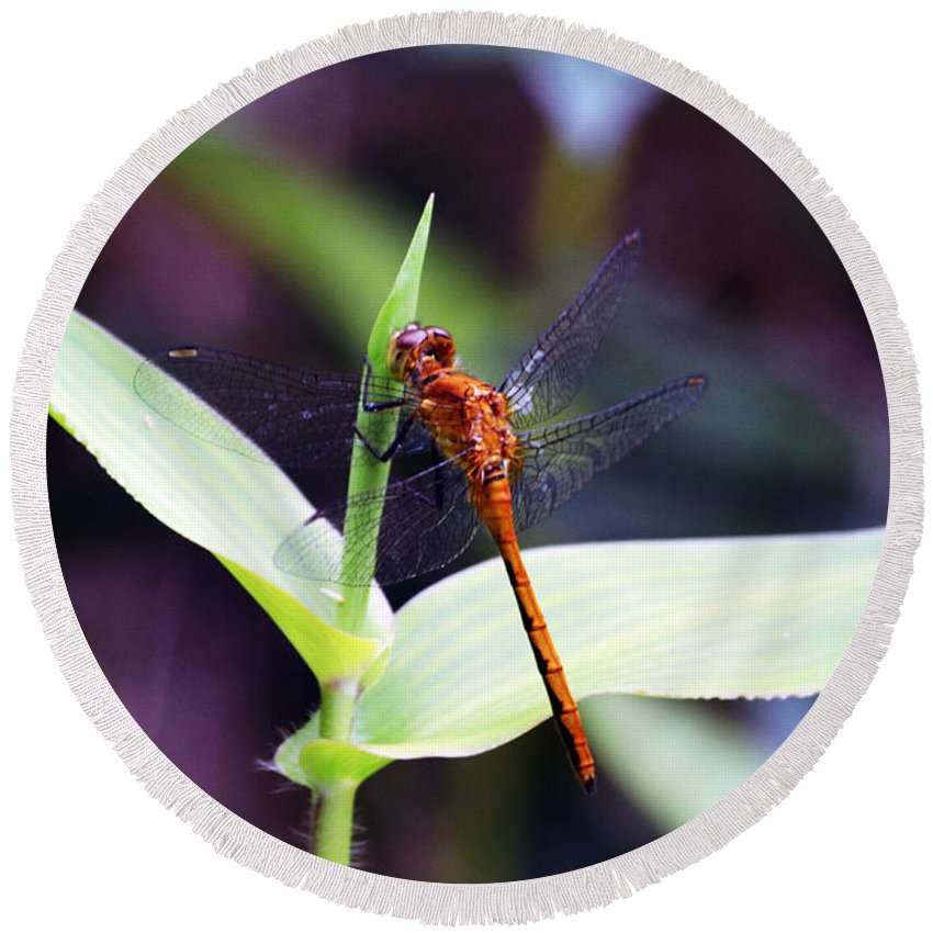 Wings Round Beach Towel featuring the photograph Dragonfly Hunt by Kevin Fortier