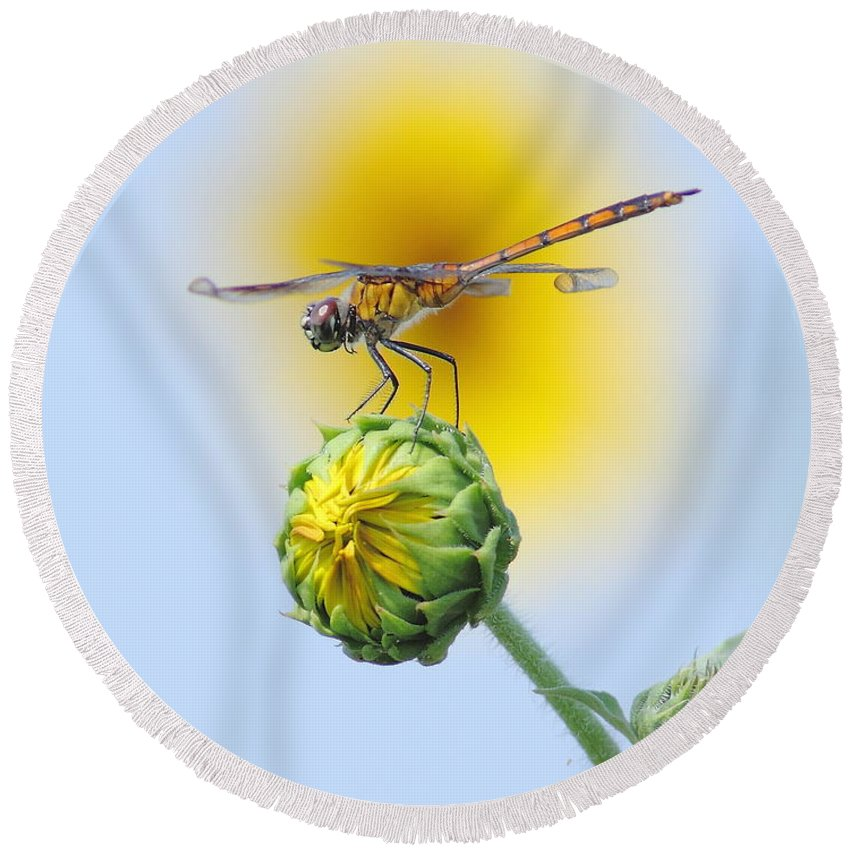 Nature Round Beach Towel featuring the photograph Dragonfly In Sunflowers by Robert Frederick