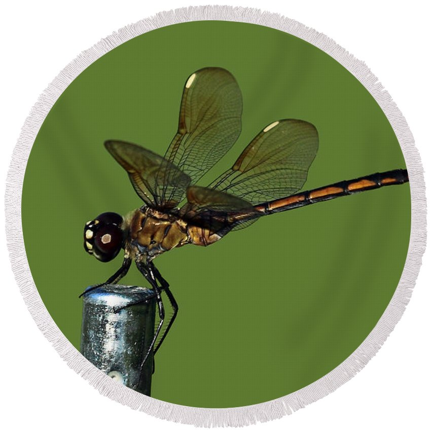 Dragonfly Round Beach Towel featuring the photograph Dragonfly by Meg Rousher