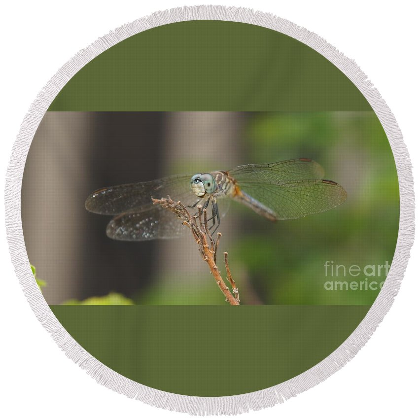 Dragonfly Round Beach Towel featuring the photograph Dragonfly by Megan Cohen
