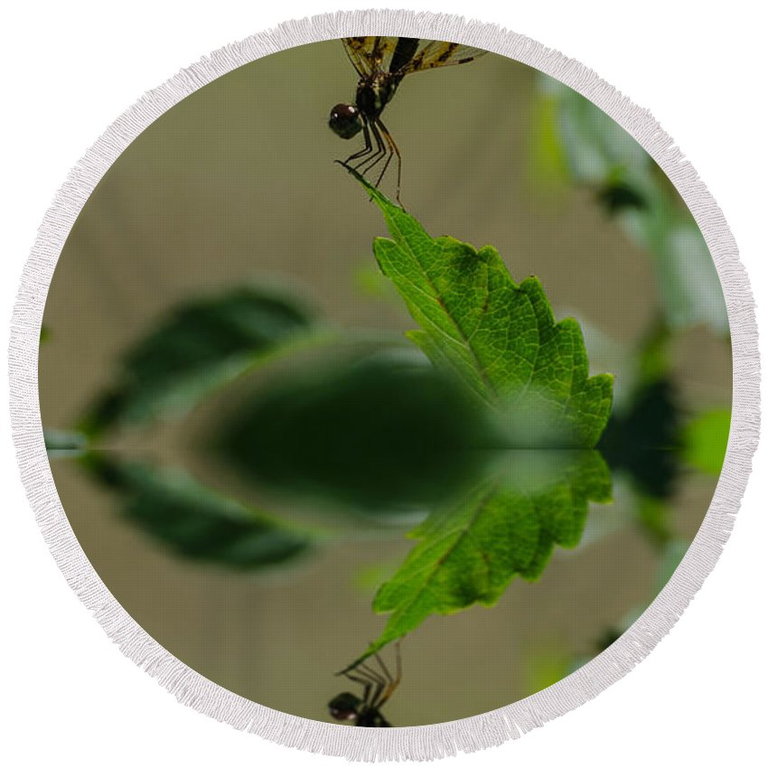 Insect Round Beach Towel featuring the photograph Dragonfly Reflection by Donna Brown