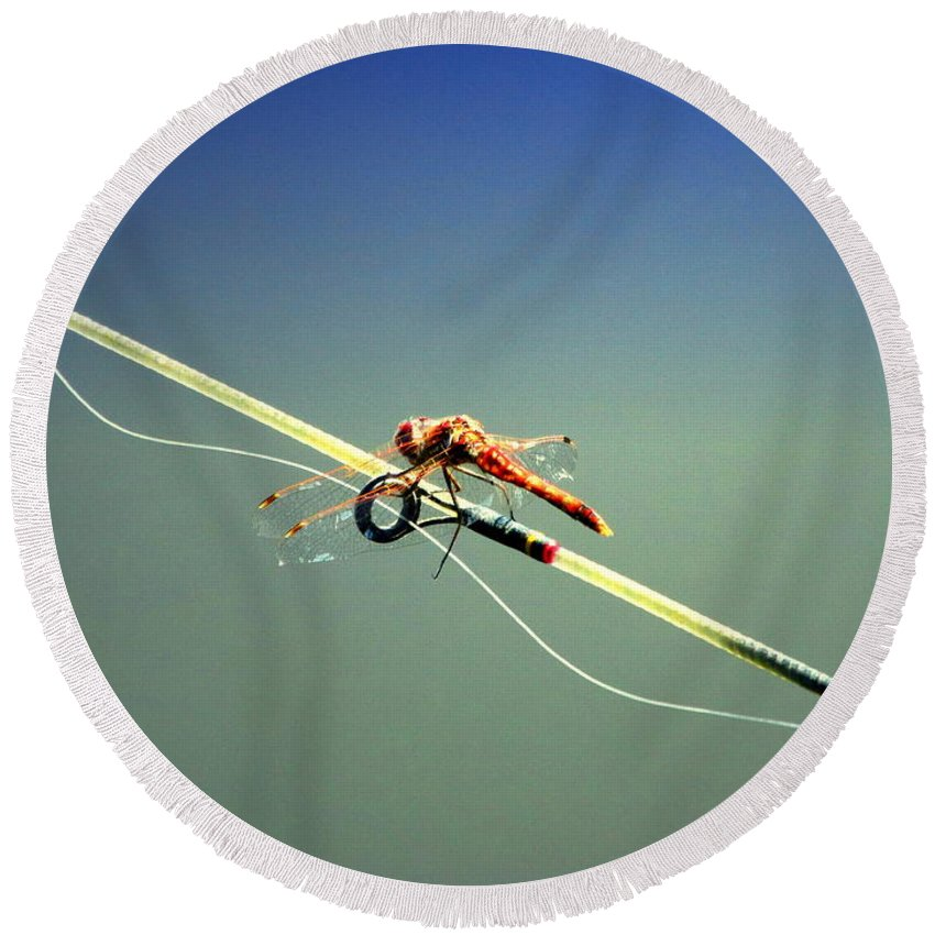 Dragonfly Round Beach Towel featuring the photograph Dragonfly Resting Station by Joyce Dickens