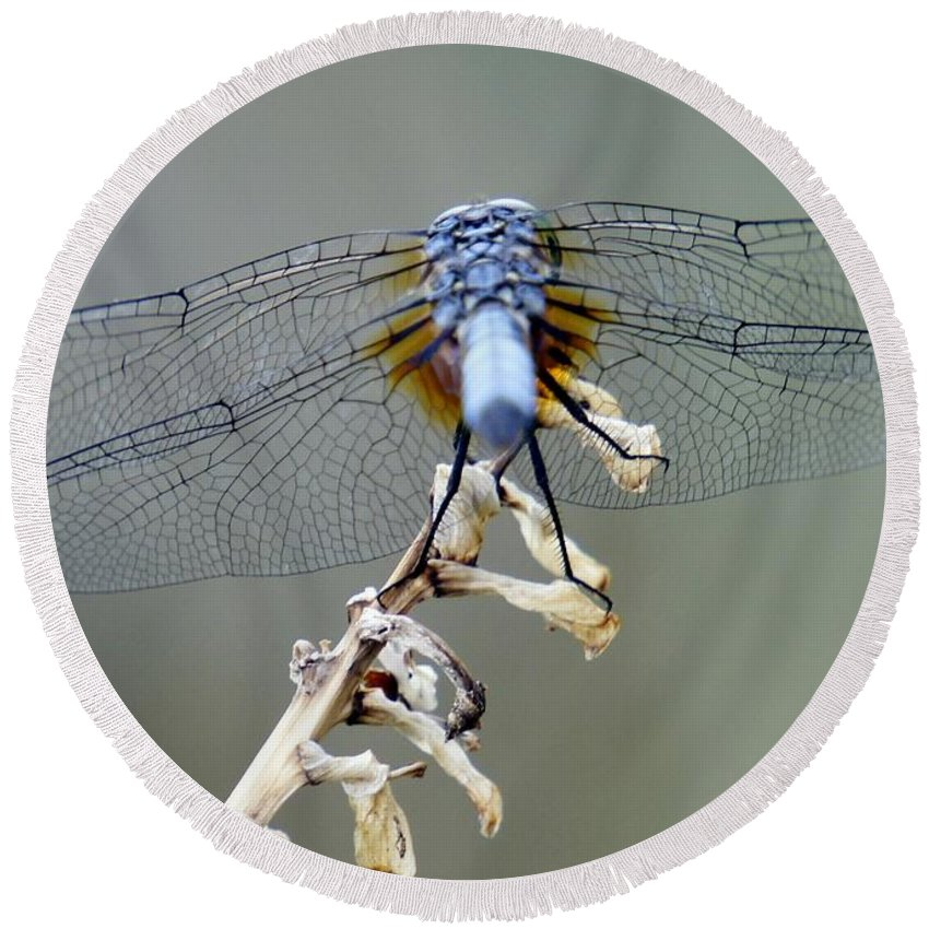 Dragonfly Round Beach Towel featuring the photograph Dragonfly Wing Details II by Lilliana Mendez