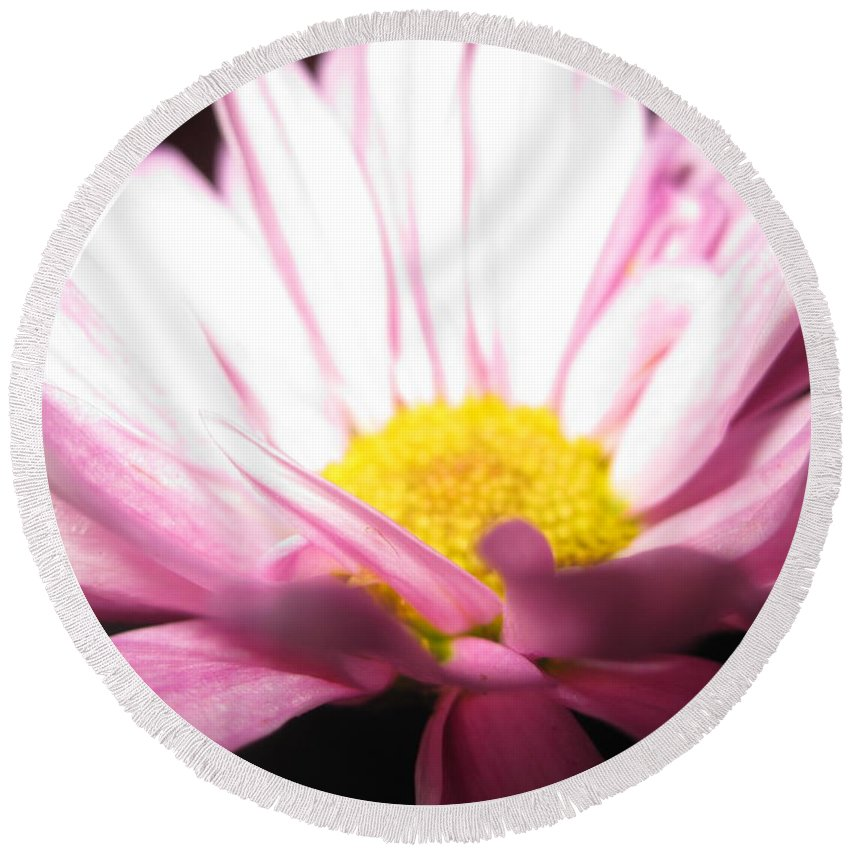 Floral Round Beach Towel featuring the photograph Dramatic Pink by Tara Shalton