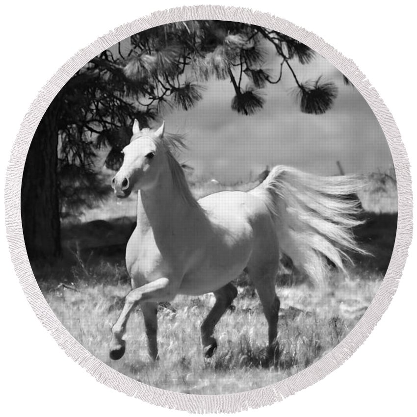 Dream Horse Round Beach Towel featuring the photograph Dream Horse by Wes and Dotty Weber