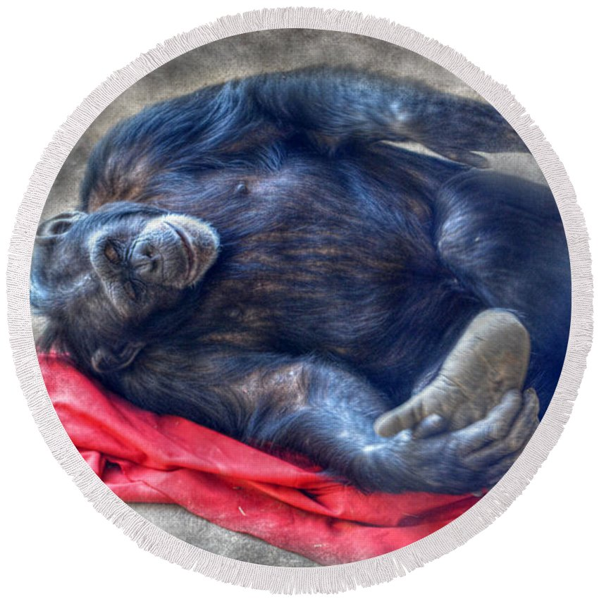 Landscape Round Beach Towel featuring the photograph Dreaming Of Bananas Chimpanzee by Peggy Franz