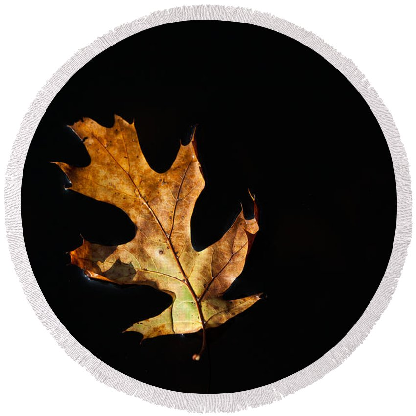 Leaf Round Beach Towel featuring the photograph Dry On Water by Karol Livote