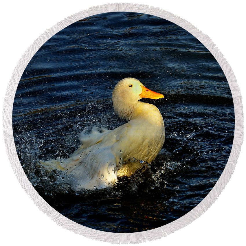 Animal Round Beach Towel featuring the photograph Duck by TouTouke A Y