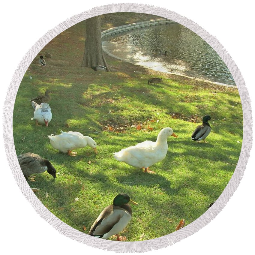 Ducks Round Beach Towel featuring the photograph Ducks At The Park by Donna Wilson