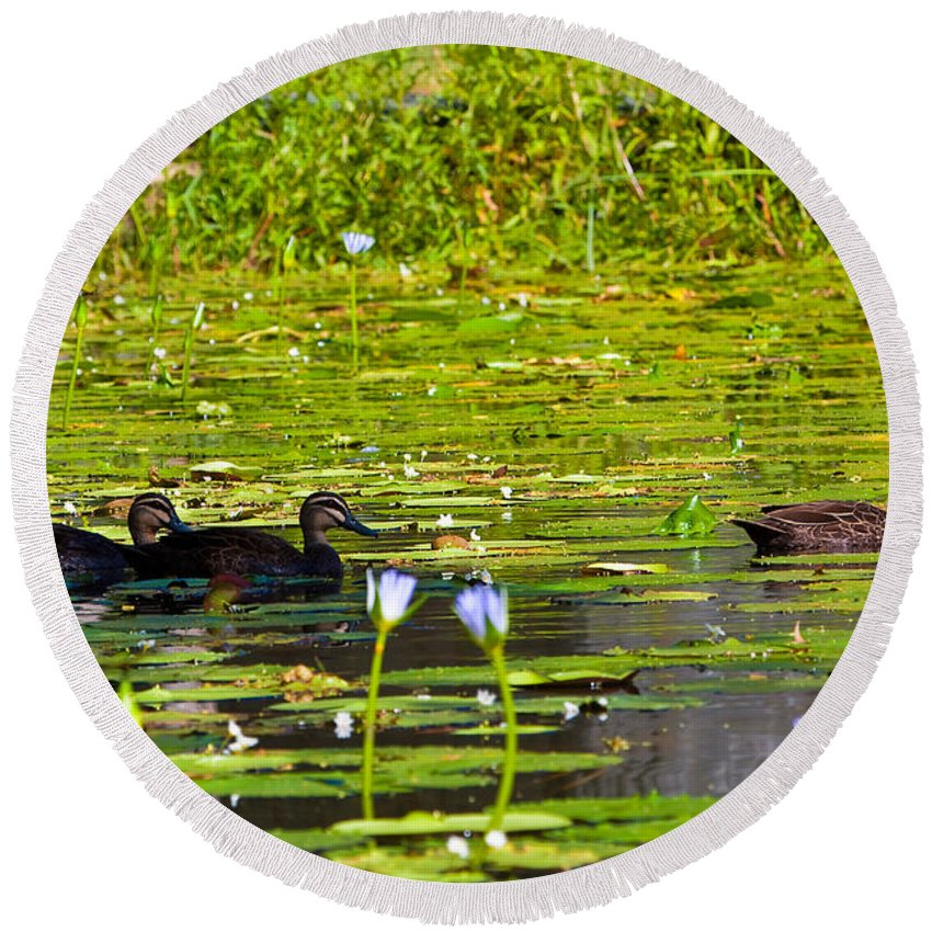 Duck Round Beach Towel featuring the photograph Ducks In Lily Pond by Darren Burton
