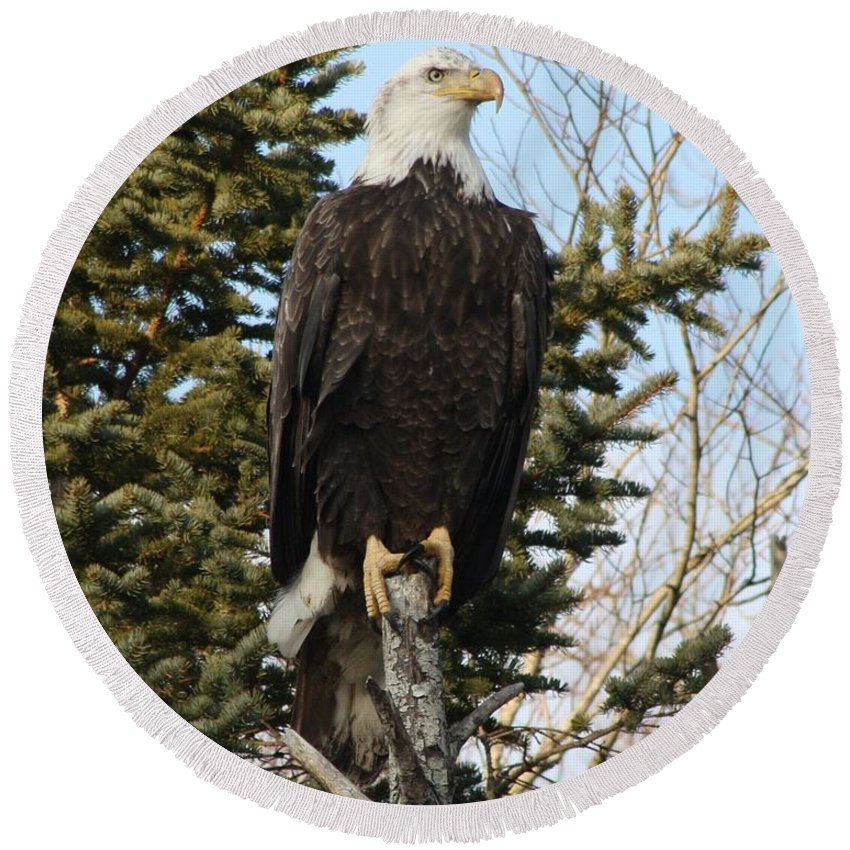 Eagle Round Beach Towel featuring the photograph Eagle 3 by Joseph Marquis