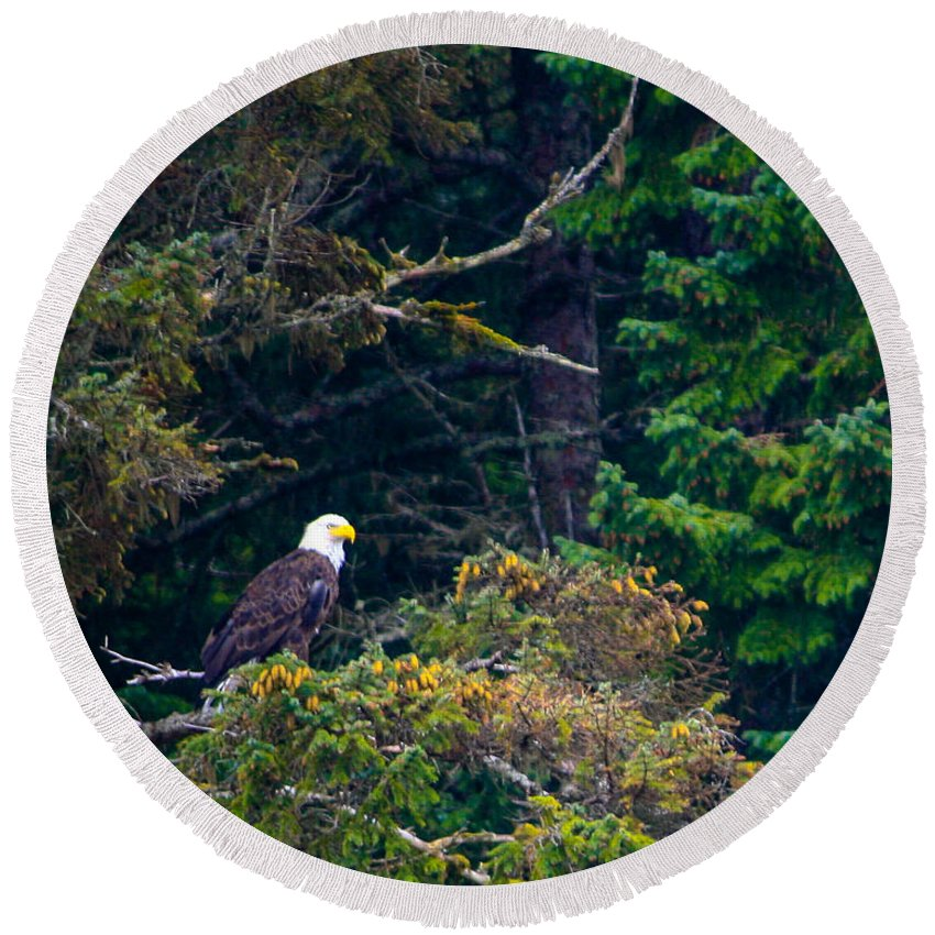 Bald Eagle Round Beach Towel featuring the photograph Eagle In Trees by John Hannan