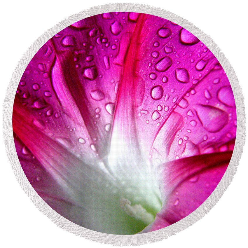 Morning Glory Round Beach Towel featuring the photograph Early Morning Rain by Richard Copeland