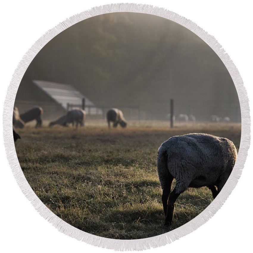 Sheep Round Beach Towel featuring the photograph Early Morning Sheep by David Arment