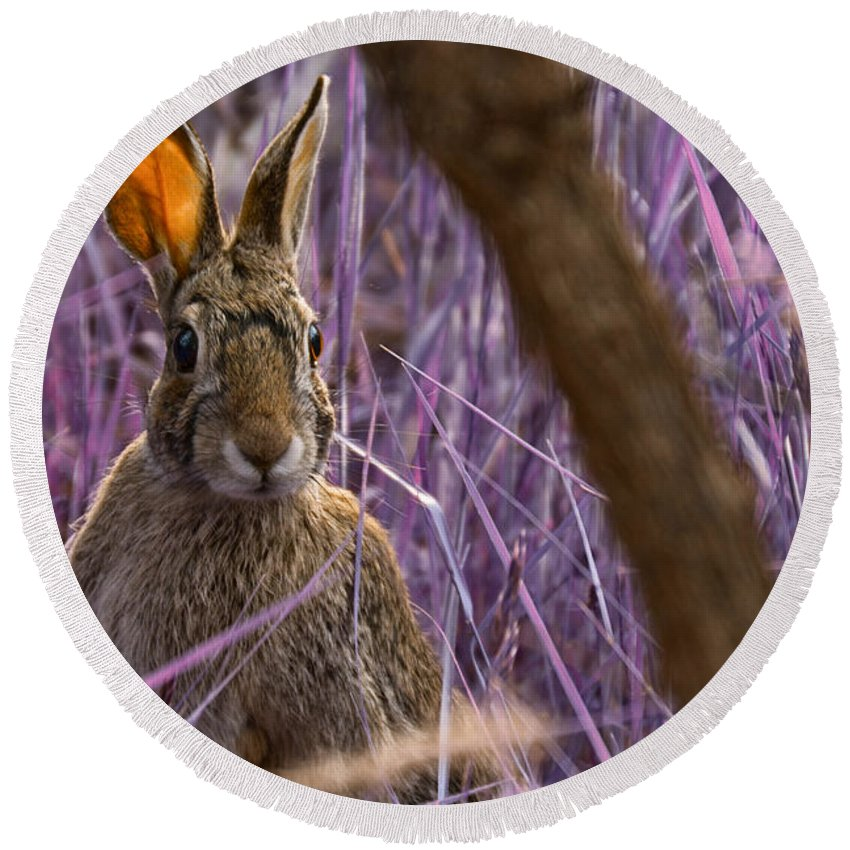 Easter Bunny Round Beach Towel featuring the photograph Easter Bunny by Douglas Barnard