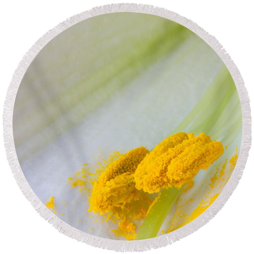 Yellow Round Beach Towel featuring the photograph Easter Lily Macro by Heidi Smith