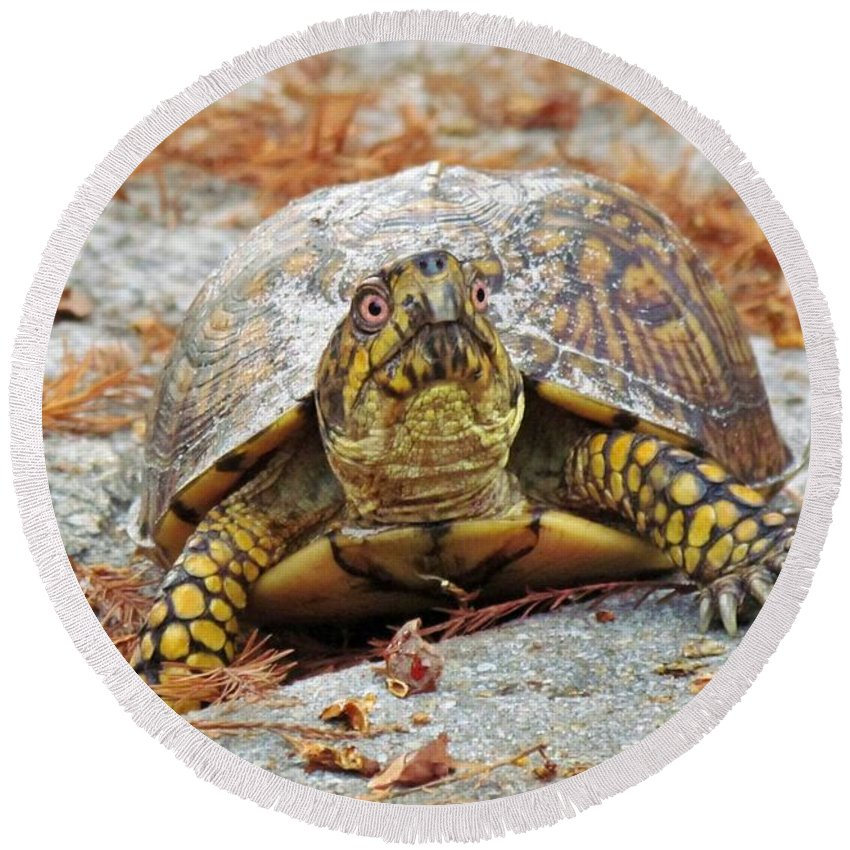 Box Turtle Round Beach Towel featuring the photograph Eastern Box Turtle by Cynthia Guinn