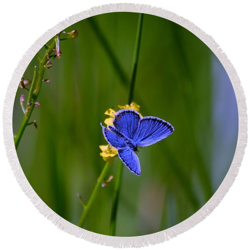 Blue Butterfly Round Beach Towel featuring the photograph Eastern Tail Blue Butterfly by Peggy Franz
