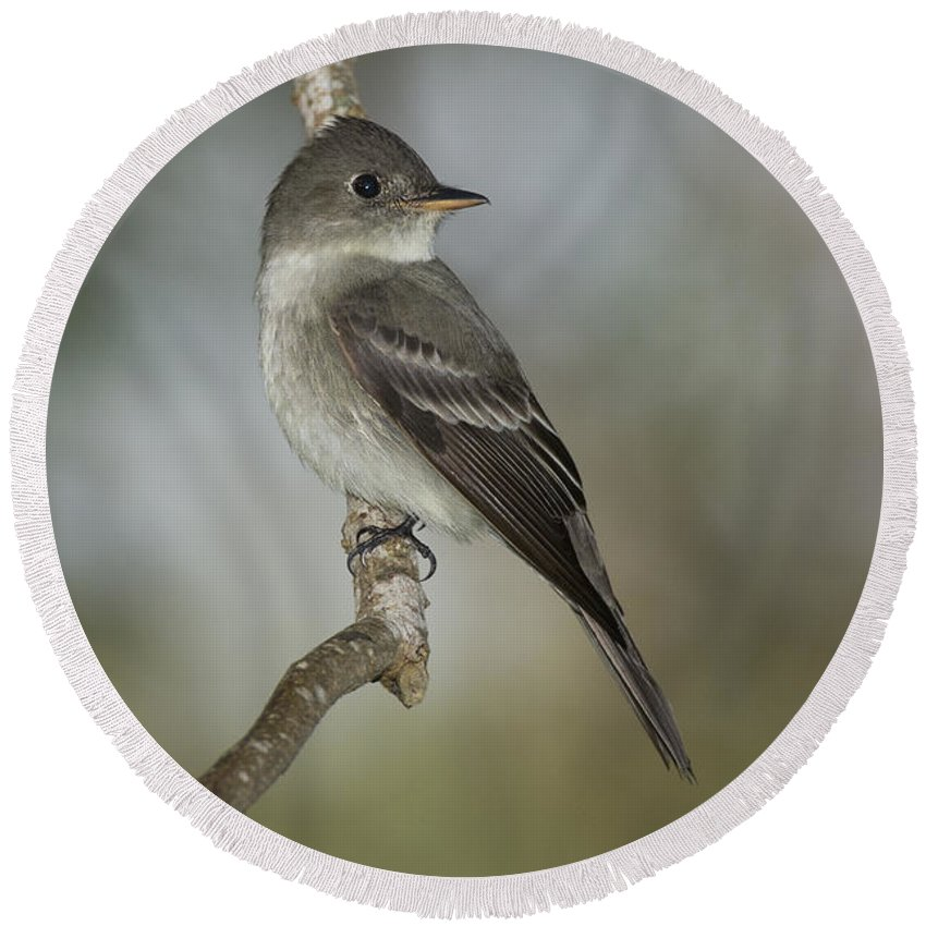 Eastern Wood-pewee Round Beach Towel featuring the photograph Eastern Wood-pewee by Anthony Mercieca