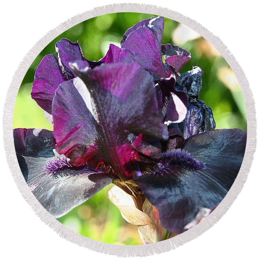 Flower Round Beach Towel featuring the photograph Ebony Violet by Susan Herber