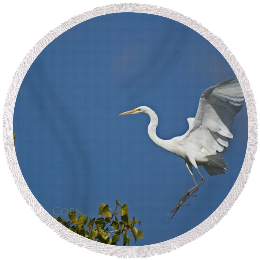 Egret Round Beach Towel featuring the photograph Egret Landing by Heather Coen