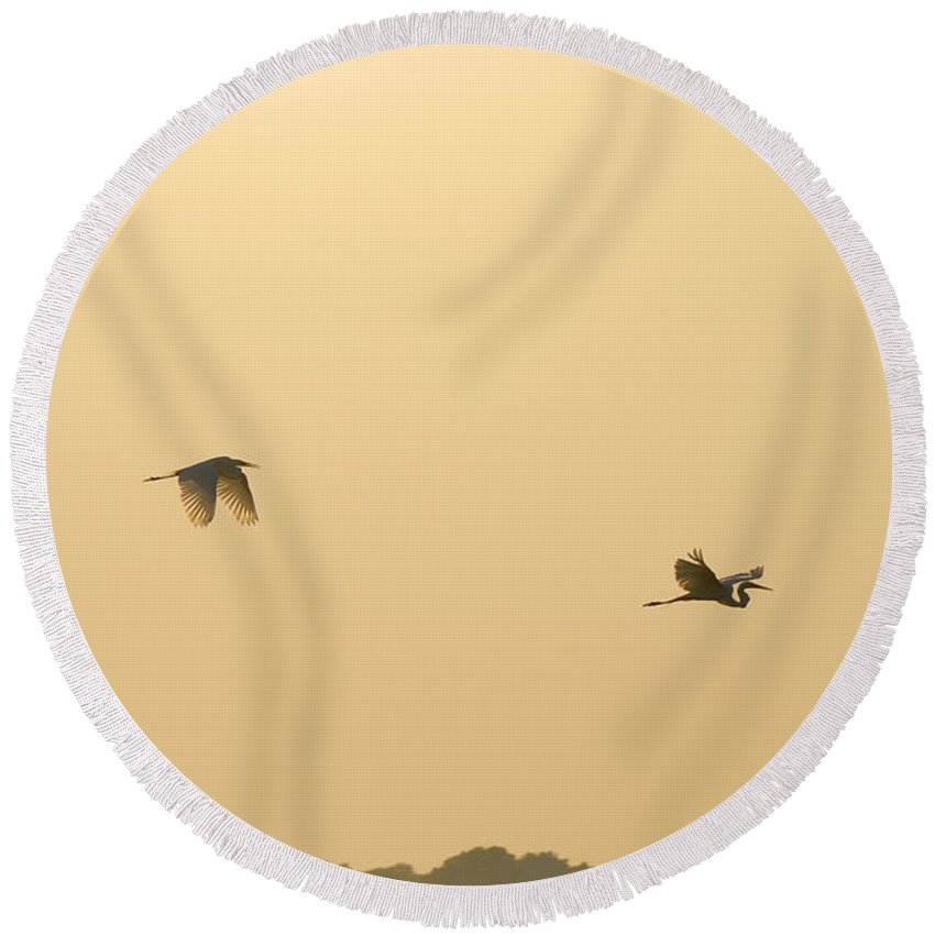 Egret Round Beach Towel featuring the photograph Egrets In Flight by Charles Beeler