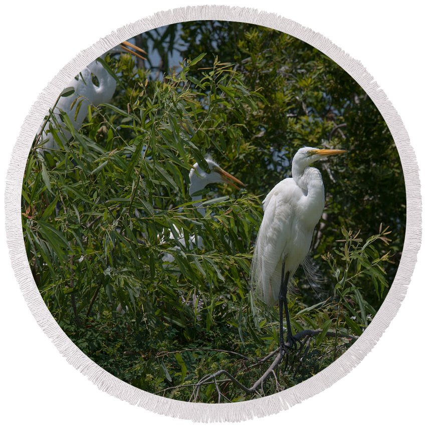 Egret Round Beach Towel featuring the photograph Egrets In Tree by Dale Powell