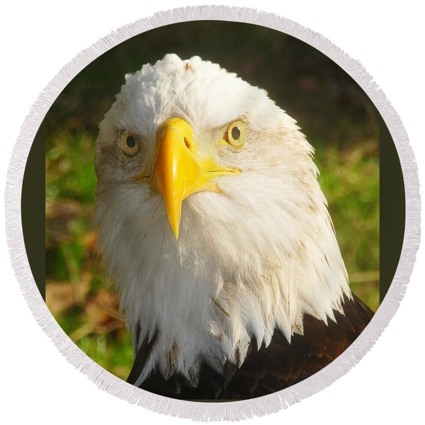 American Bald Eagle Round Beach Towel featuring the photograph Bald Eagle Head Shot Two by David Lee Thompson