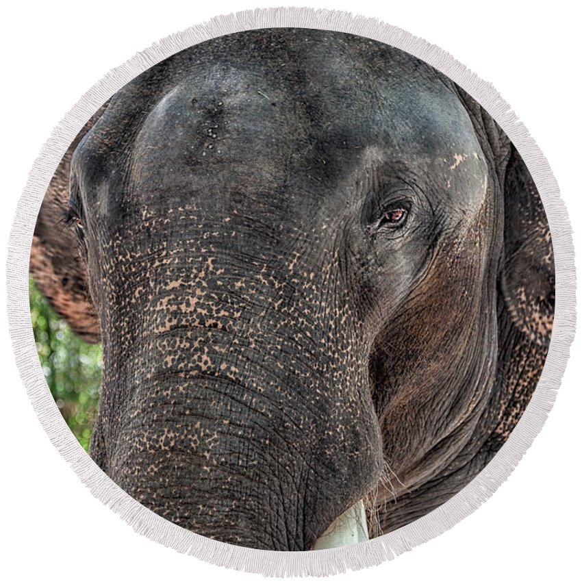 Asia Round Beach Towel featuring the photograph Elephant by Adrian Evans