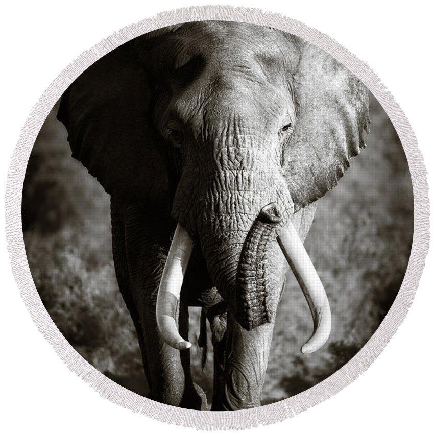 Elephant Round Beach Towel featuring the photograph Elephant Bull by Johan Swanepoel