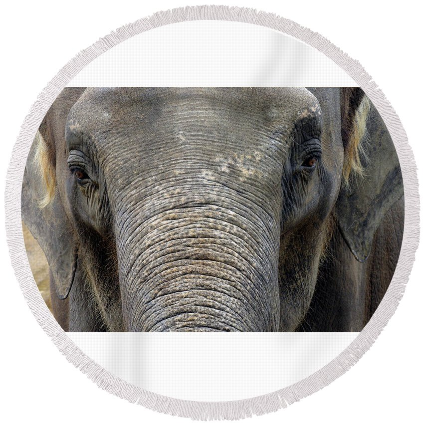 Elephant Round Beach Towel featuring the photograph Elephant Close Up 1 by Tom Conway