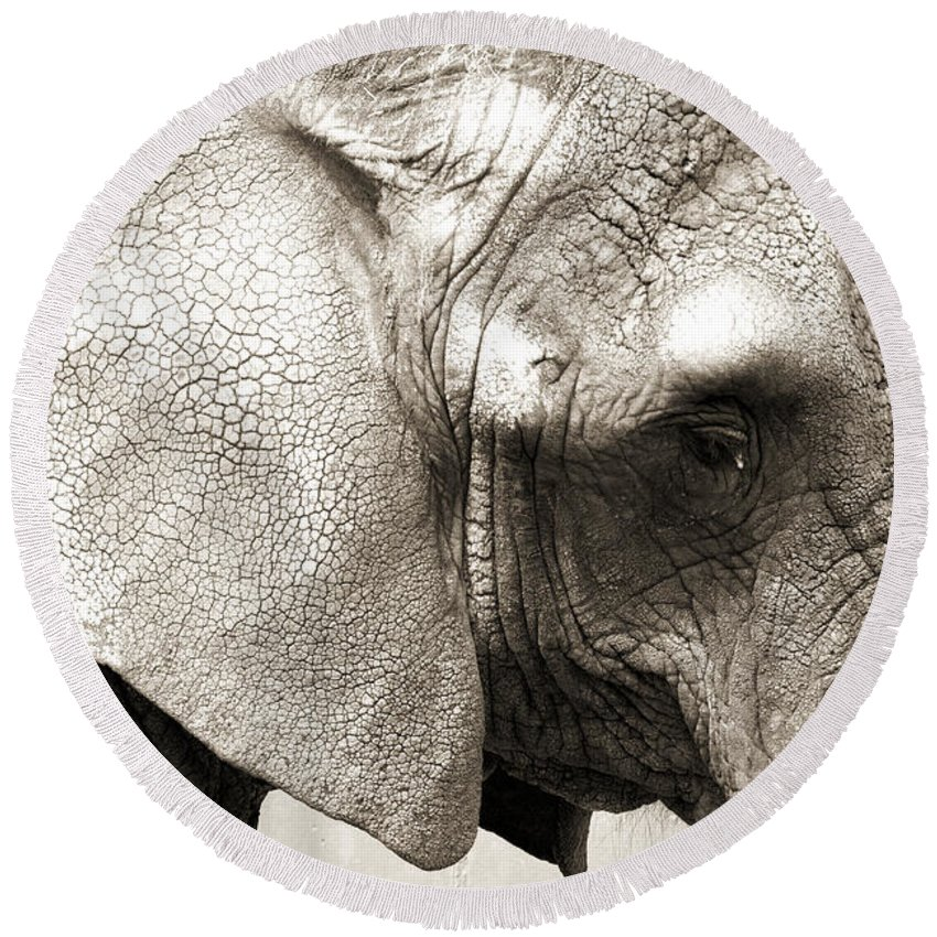 Photography Round Beach Towel featuring the photograph Elephant by Jackie Farnsworth