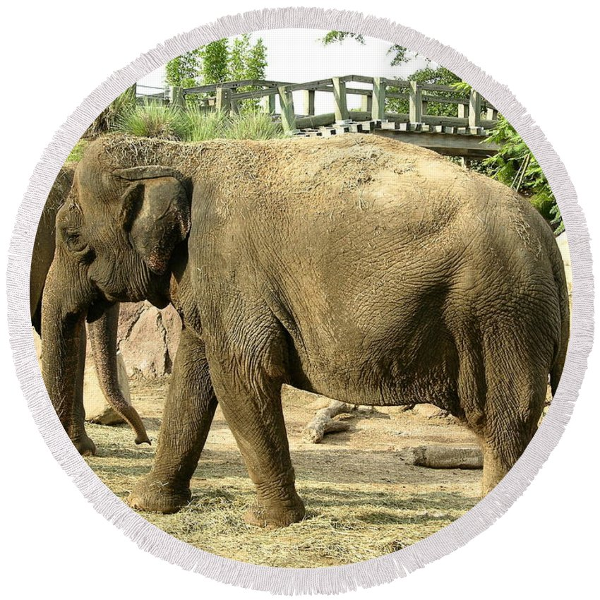 Animal Round Beach Towel featuring the photograph Elephant by Louis Yamonico