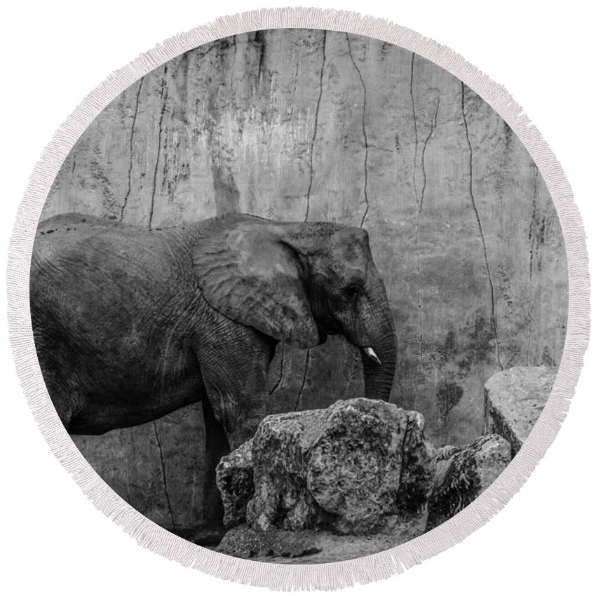 Elephant Round Beach Towel featuring the photograph Elephant by Marco Oliveira