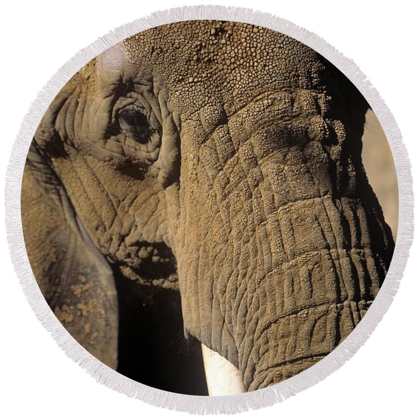 Elephant Round Beach Towel featuring the photograph Elephant Portraint by John Harmon