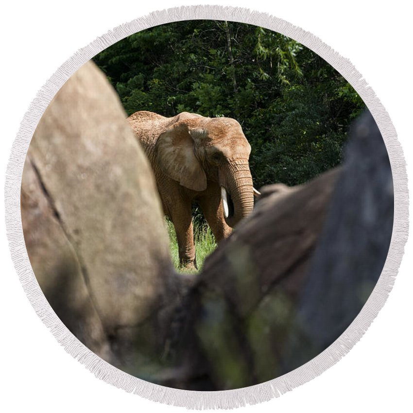 African Elephant Round Beach Towel featuring the digital art Elephant Spotted Between Rocks by Chris Flees