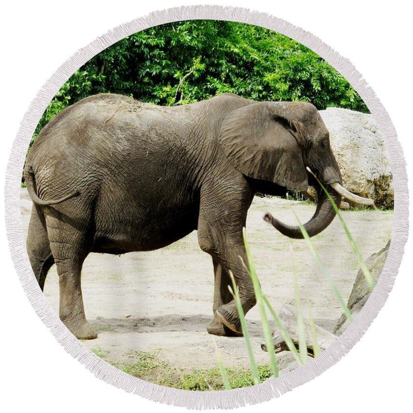 Elephant Round Beach Towel featuring the photograph Elephant by Zina Stromberg