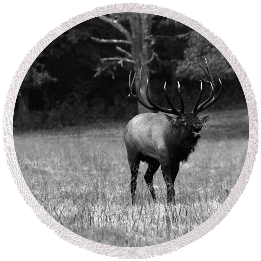 Carol R Montoya Round Beach Towel featuring the photograph Elk In Black And White by Carol Montoya