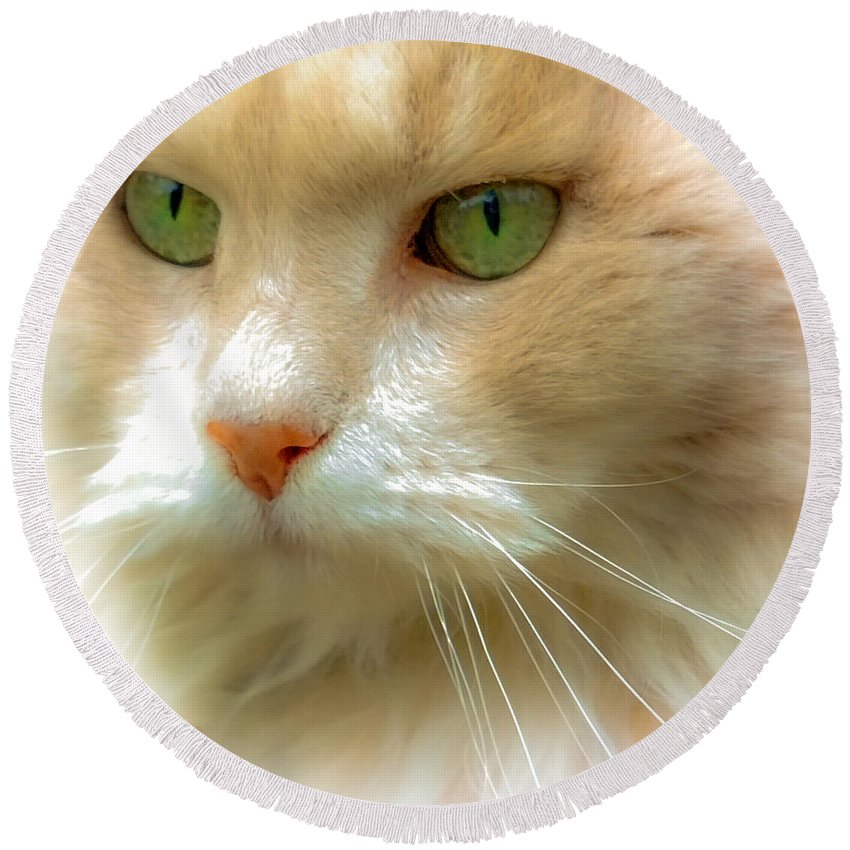 Cat Eyes Round Beach Towel featuring the photograph Emerald Eyes by Karen Wiles