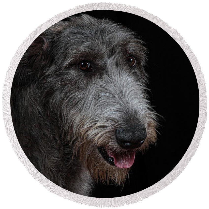 Irish Wolfhound Round Beach Towel featuring the photograph Irish Wolfhound II by Agustin Uzarraga