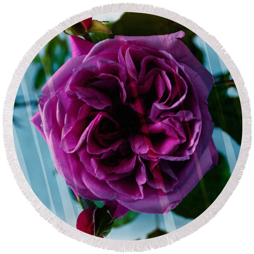 English Rose Round Beach Towel featuring the photograph English Rose - Purple Rose - Fragrant Rose by Barbara Griffin