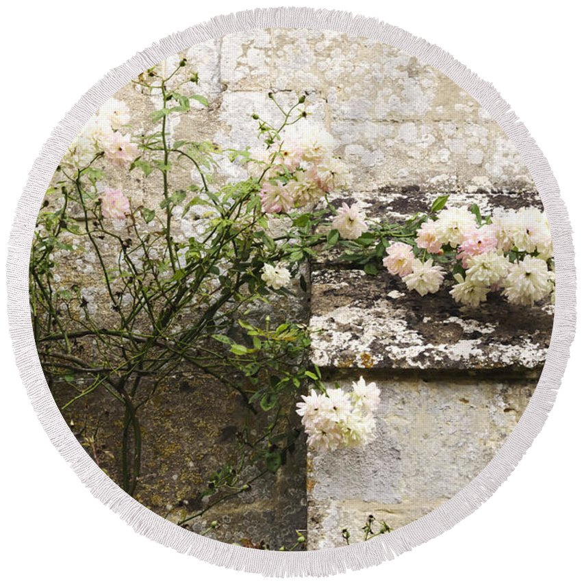 Floral; Flora; Flowers; Rose; Roses; Bush; Vine; Climb; Climbing; Pink; Green; Blue; Stone; Fa�ade; Building; Architecture; White; Aged; Decay; Branches; Tall; Roof; Wall; Side; Green; Leaves; Beautiful; Pretty; Lovely; Serene; Feminine; English Rose; Cultivated; Bunch; Group; Calm Round Beach Towel featuring the photograph English Roses II by Margie Hurwich