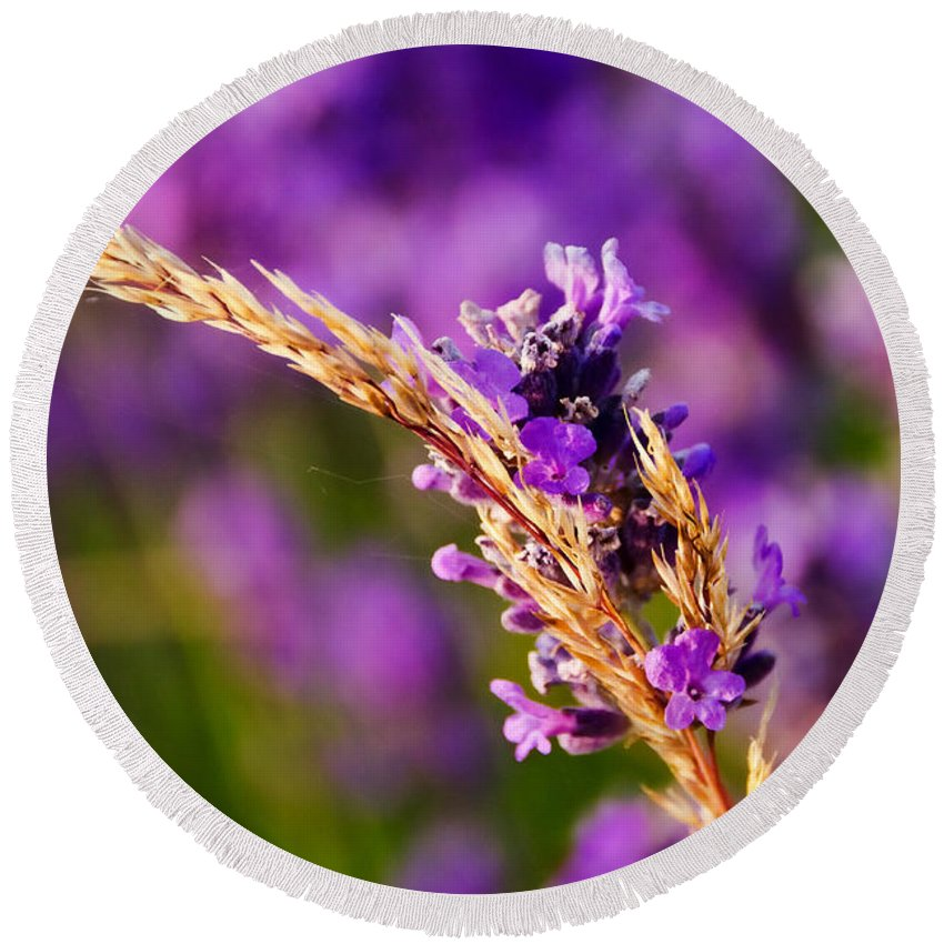 Lavender Round Beach Towel featuring the photograph Entangled by Susie Peek