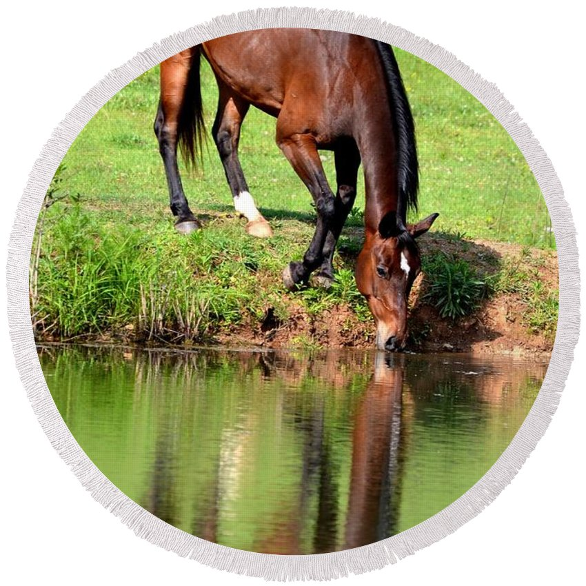 Equine Reflections Round Beach Towel featuring the photograph Equine Reflections by Maria Urso