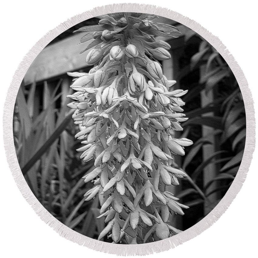 Eucomis Round Beach Towel featuring the digital art Eucomis Named Bicolor by J McCombie