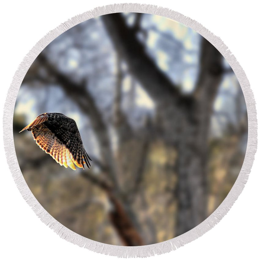 Red Tail Round Beach Towel featuring the photograph Evening Light by Michael Winn