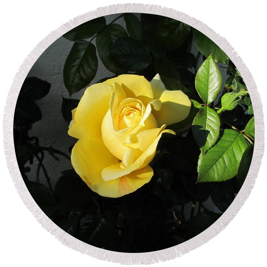 Yellow Rose Round Beach Towel featuring the photograph Evening Sun by Helmut Rottler
